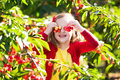 Little girl picking cherry in fruit garden Royalty Free Stock Photo