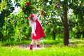 Little girl picking fresh cherry berry in the garden Royalty Free Stock Photo