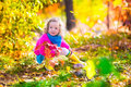 Little girl picking mushrooms in autumn forest adorable playing a beautiful park big mushroom and yellow oak leaves having fun on Stock Images