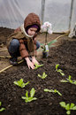 Little girl planting lettuce seedling Royalty Free Stock Photo