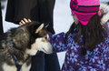 Little girl playing snow sled dog huskys Royalty Free Stock Photo