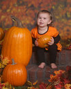 Little girl with pumpkins Stock Images