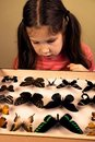 Little Girl Researching Entomology Collection of Tropical Butterflies Royalty Free Stock Photo