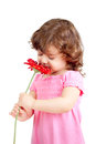 Little girl smelling flower, isolated on white Royalty Free Stock Photo