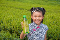 The little girl in the tea garden with green Royalty Free Stock Images