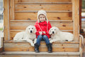 A little girl with two puppy golden retriever portrait of beautiful her dogs labrador child puppies of sitting on stair Stock Photos