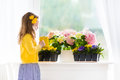 Little girl watering blooming flowers at home Royalty Free Stock Photo