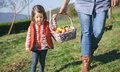 Little girl and woman carrying basket with apples closeup of women a wicker fresh organic healthy food harvest time concept Stock Photos