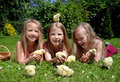 Little girls playing with chicks Royalty Free Stock Photos