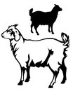 Little goat cute black and white outline and detailed silhouette Royalty Free Stock Photo