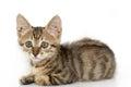 Little gray kitten portrait up