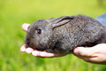 Little gray rabbit on meadow Stock Photos