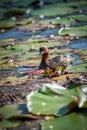 Little Little Grebe bird on the lake