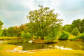 Little green isle in the park with huge tree center Royalty Free Stock Image