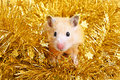 Little hamster in tinsel Royalty Free Stock Image