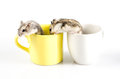 Little hamsters going out two a yellow cup and white cup Royalty Free Stock Images