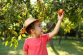 Little happy boy touching apple in straw hat taking down red from tree Stock Photos