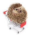 Little hedgehog and shopping cart. Royalty Free Stock Photo