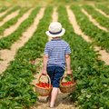 Little Kid Boy Picking Strawbe...