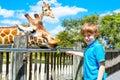 Little kid boy watching and feeding giraffe in zoo