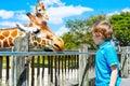 Little kid boy watching and feeding giraffe in zoo Royalty Free Stock Photo