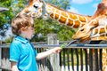 Little kid boy watching and feeding giraffe in zoo. Happy child having fun with animals safari park on warm summer day Royalty Free Stock Photo