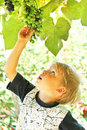 Little kid and grape Stock Photos