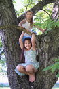 Little kids - girls standing on tree Royalty Free Stock Photo