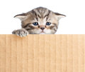 Little kitten behind cardboard fence Stock Images