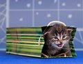 Little kitten cute in a bright gift bag over blue background Stock Images