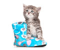 Little kitten cute with fleece boot isolated on white background Stock Photo