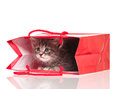 Little kitten cute in a gift bag isolated on white background Royalty Free Stock Images