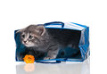 Little kitten cute in a gift bag isolated on white background Royalty Free Stock Photo
