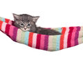 Little kitten cute in a hammock isolated on white background Royalty Free Stock Photography