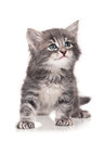 Little kitten cute isolated on white background Stock Photo