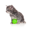 Little kitten cute with toy ball isolated on white background Royalty Free Stock Image