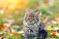 Little kitten on the grass in autumn Royalty Free Stock Photo