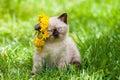 Little kitten on the grass Royalty Free Stock Photo