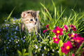 Little kitten in grass and flowers Green background Royalty Free Stock Photo