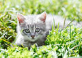 Little kitten in the grass Royalty Free Stock Photo