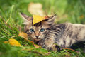 Little kitten on the grass Royalty Free Stock Photo