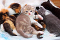 Little kitten and his brothers and sisters Royalty Free Stock Photography
