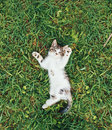 Little kitten lying on green grass Royalty Free Stock Photo