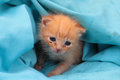 Little kitten outcast red haired Royalty Free Stock Photography