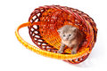 Little kitten in pad Royalty Free Stock Photo