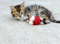 Little kitten playing with ball of wool Stock Images
