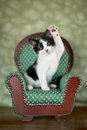 Little Kitten Sitting in a Chair Royalty Free Stock Images