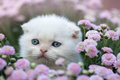 Little kitten sitting in flowers