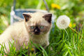 Little kitten sitting on the grass Royalty Free Stock Photo