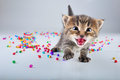 Little kitten with small metal jingle bells beads studio shot Stock Photos